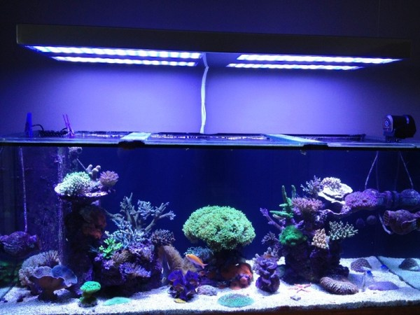 reef aquarium with orphek led lighting