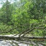 połamane drzewa_ul.Przemysłowa_08