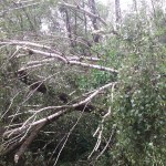 pochyloe drzewo_ul. Targowa_05