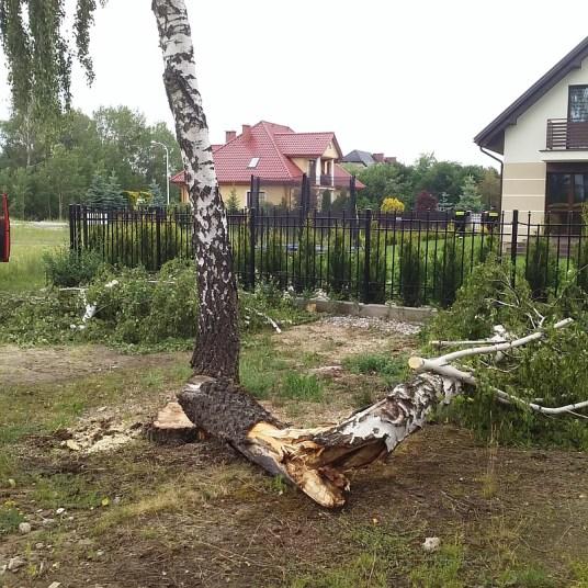powalone drzewo_ul. Geodetów