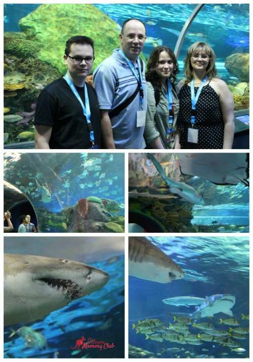 Ripley's Aquarium Canada- Dangerous Lagoon