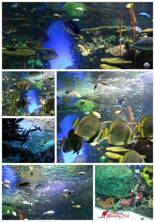 Ripleys' Aquarium Rainbow Reef