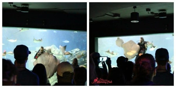 Ripley's Aquarium Ray Bay