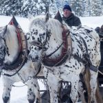 Sleigh Rides in the Ottawa Region
