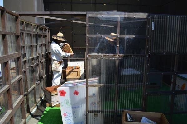 銀座ビル屋上の養蜂場