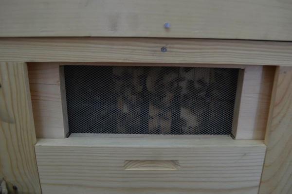 熊谷養蜂-6