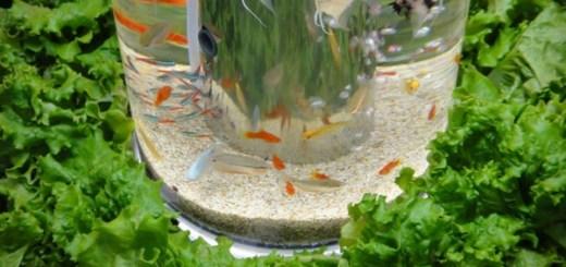 ちょっと高いけど癒やされそう。熱帯魚とレタスを同時に育てられる30万円の菜園水槽