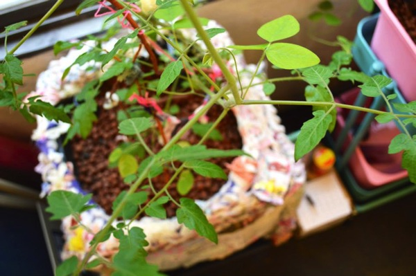 クラフト作家「KAIE」がアクアポニックス菜園をおしゃれにデザイン-13