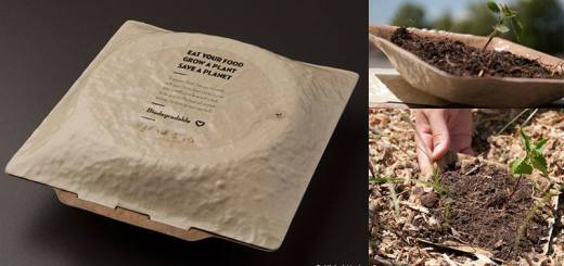 食器がプランターに変身。100%土に還るエコな容器で地球にやさしくなろう