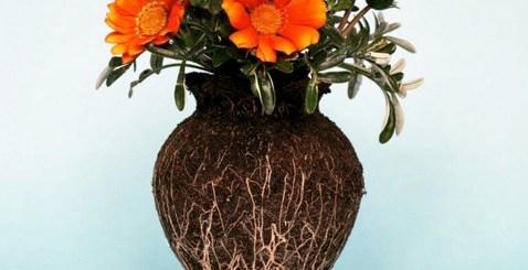 花瓶を割っても崩れない土。ドイツの写真家がみせる植物のたくましい姿