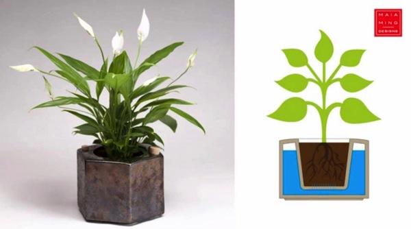 Eco pot 3