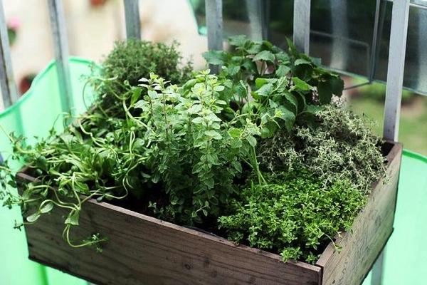 gardening-veranda