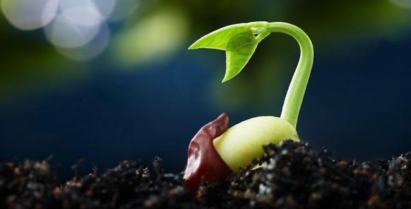 """緑化ワークショップ。みんなで""""種だんご""""をつくって放り投げよう!"""