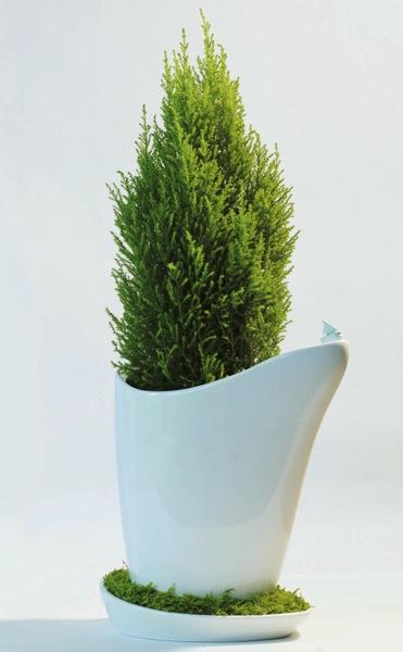 水受け皿でもグリーンを育てよう