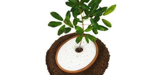 人の命から植物の命へ。メモリアルプランター「The Spiritree」で大切な人を感じよう