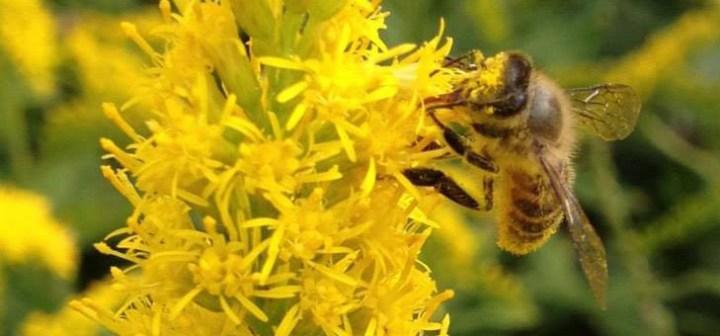 食べるだけではない、鑑賞して、自分で生産するハチミツーー養蜂のススメ