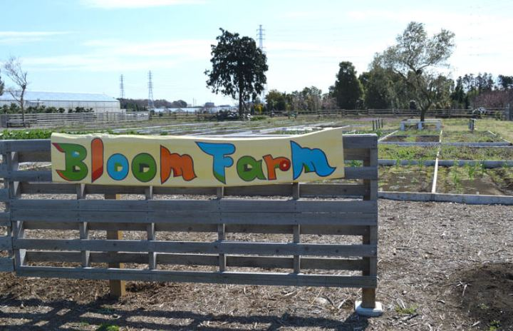 bloom farm