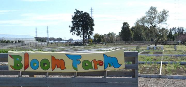 横浜から1時間で行ける、開放感あふれる貸し農園「Bloom Farm」(ブルームファーム)