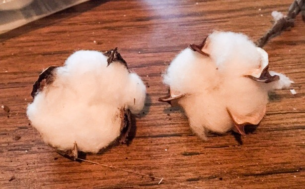 How_to_make_cotton_boll_pods