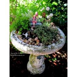 Small Crop Of Fairy Garden Planter Box