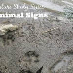 Nature Study – Animal Signs