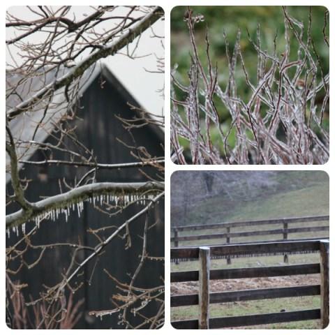 Ice Nature Study