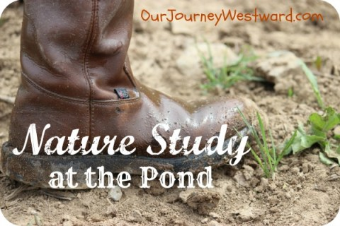 Nature Study at the Pond | Our Journey Westward