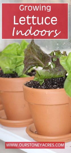 Relieving Winter Growing Lettuce S Winter Stoney Acres Growing Potatoes S A Bucket Growing Potatoes S Growing Lettuce S