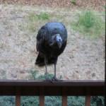 Happy Thanksgiving: TurkeyGobbleGobble.