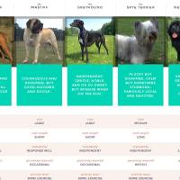 AKC Launches Breed Selector and You vs. Breed - $100 Amazon GC Giveaway
