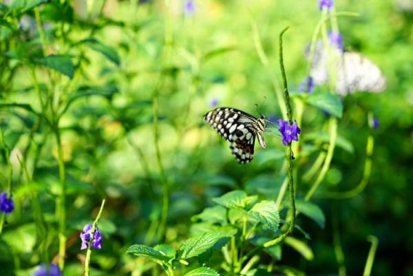 Гасан сад бабочек