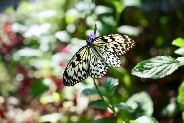 Marinduque Сад бабочек