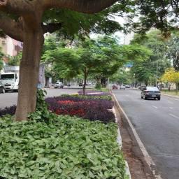 Hoje, 10 de maio, Maringá, a Cidade Canção, faz aniversário. Passeie nas imagens de suas belíssimas ruas e avenidas