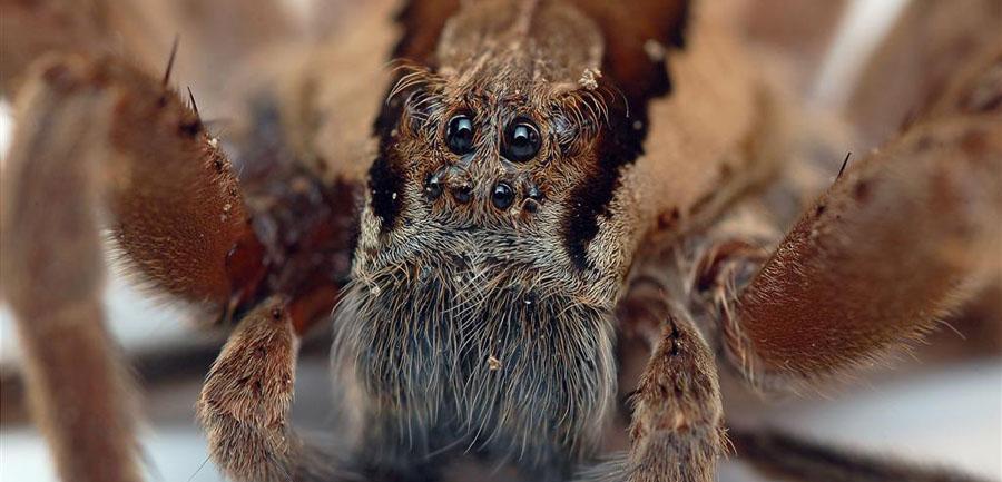 Basho's 5 Amazing Spider Encounters
