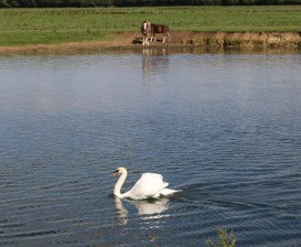 Discovering Port Meadow for the first time