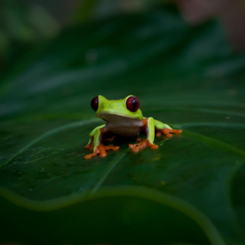 Costa Rica Pictures