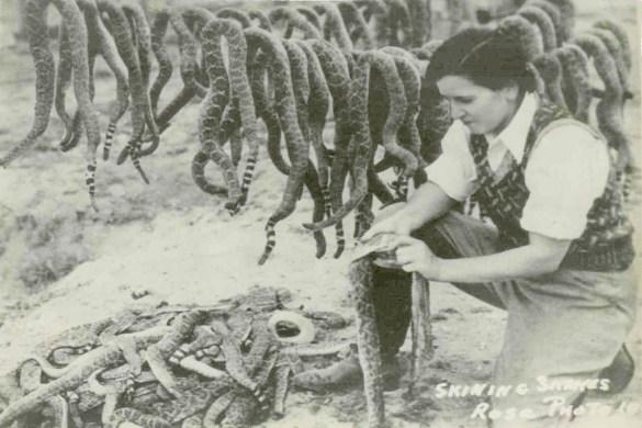 C. Reidy skinning snake