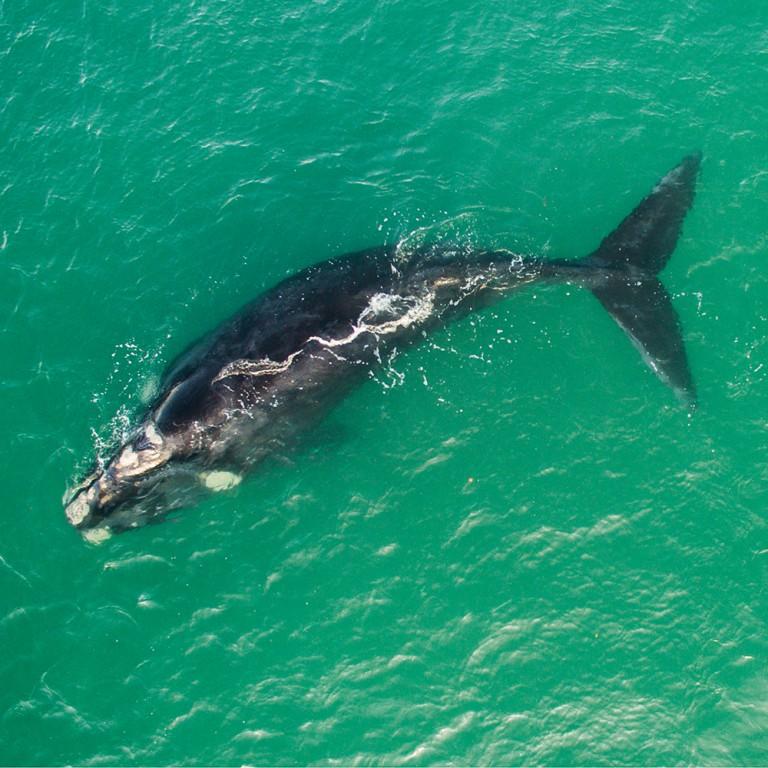 Whale Chris blog