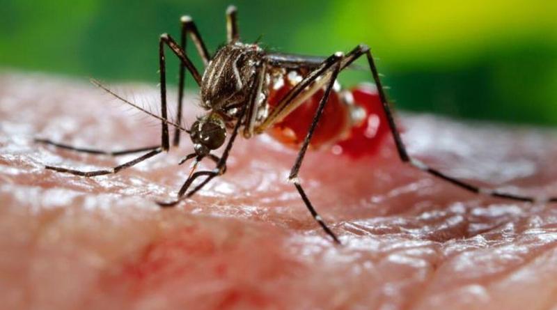 dengue fever platelet