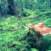 Mushroom in the woods photograph