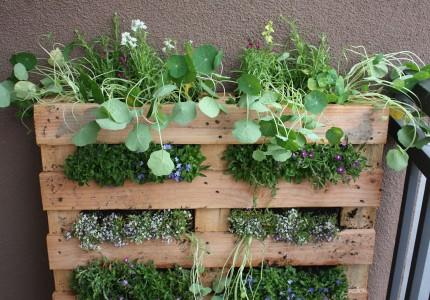 Herb Garden Made With Wooden Shipping Pallet