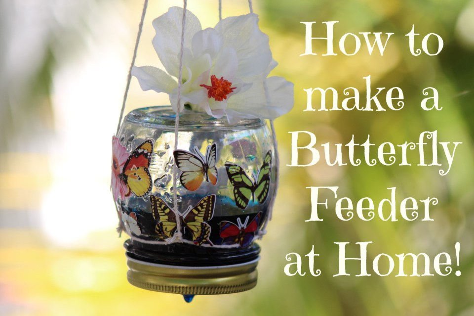 How To Make A Butterfly Feeder At Home