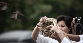 thailand_bird_release_chiang_mai