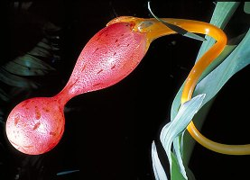 chihuly-ikebana-glass_big