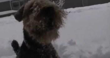 dorothy-snows