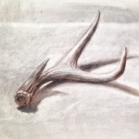 Drawing antlers in black, white and sepia charcoal.