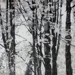black and white forest in mixed media
