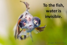 To-the-fish-Invisible-Tech-Image-by-Benson-Kua