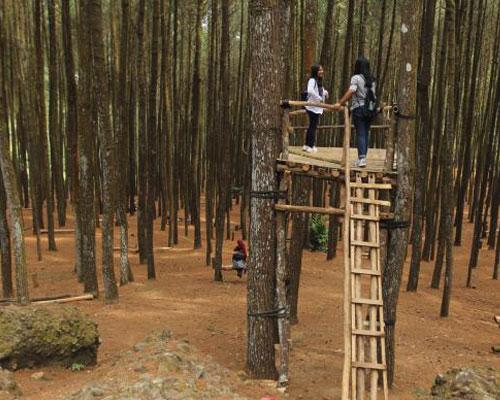 paket wisata jogja tour murah biro hutan pinus