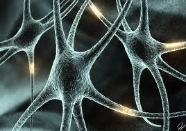 images neurnios